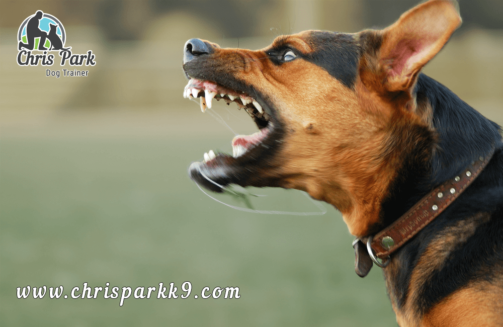 Common causes of dog bites
